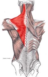 neck-shoulder-pain-combo