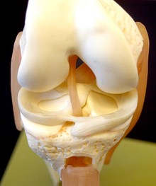 Meniscus--Dr. Nick Campos, Beverly Hills Chiropractic