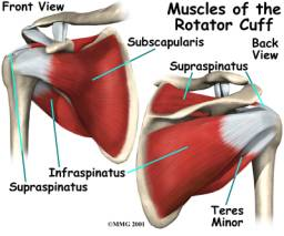 Los Angeles, West Hollywood, Beverly Hills Chiropractor Dr. Nick Campos Rotator Cuff